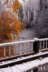 More Fall into Winter on Trout Creek (Starlisa) Tags: november winter snow cold fall ice clouds washington 2009 troutlake troutcreek nov18 didimentioncold starlisa nov2009 20091118 troutcreek2618420091118wo okiamtiredofwinteralready