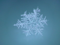 * falling from heaven * (tuvagard) Tags: snowflake snow macro star patterns details panasonic explore frontpage 108 43 week5 fz50 detaljer mnster raynox raynoxdcr250 sooc snflinga themewinter 525of2010 themeseason