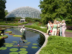 Water lily Demonstration