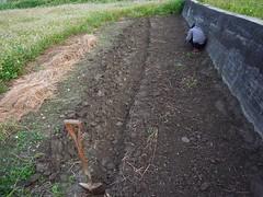 鳳林自然農田 川口由一自然農法的秧田 稻子育苗- 開溝防鼠挖洞