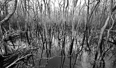 Bottomlands