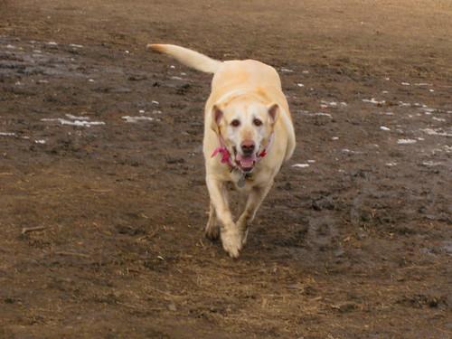 Sade runs
