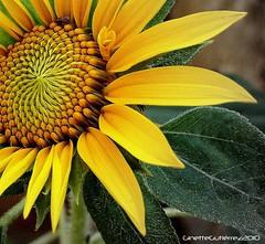 100_5758 (Ginette Gutirrez) Tags: excellentsflowers natureselegantshots flickrsportal