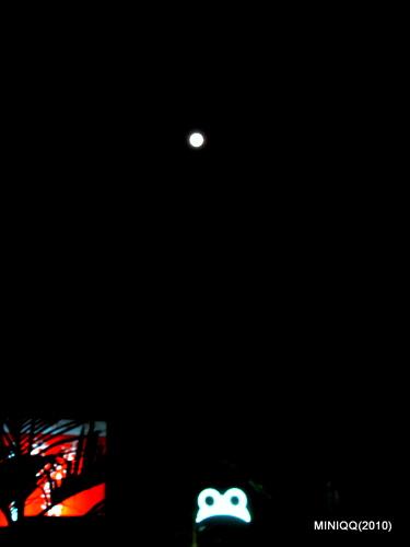 228 滿月與蛙咖啡
