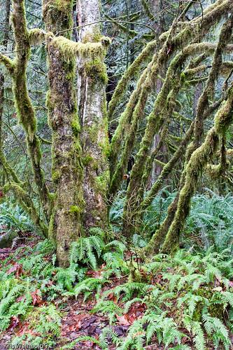Lynn Canyon, Vancouver, B.C.