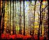 The deep forest (Tobi_2008) Tags: autumn trees color detail nature alberi forest germany deutschland hessen searchthebest herbst natur arbres tobi wald farbe bäume allemagne soe germania supershot anawesomeshot superaplus aplusphoto diamondclassphotographer flickrdiamond platinumheartaward artofimages bestcapturesaoi