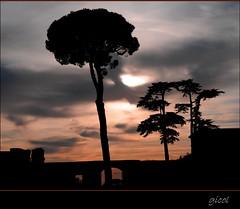 the color of the sky (gicol) Tags: sky italy rome color roma tree pine alberi italia tramonto arboles roman forum foro explore amanecer cielo historical pino frontpage sunst lazio occasio theauthorsclub