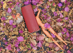 wwwp (Noureddine EL HANI) Tags: dolls poupées
