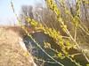 Il Corno in primavera