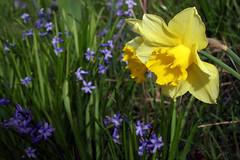 jaune bleu