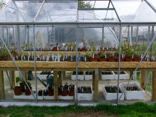 Fleurs et tubes.... MAJ 4473225269_de3624605f