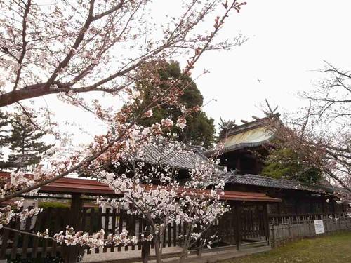 大和郡山お城まつり-09