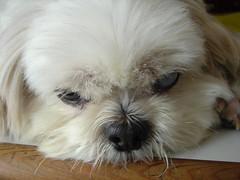 In memory of the beloved ..  (edwardc) Tags: dog beloved