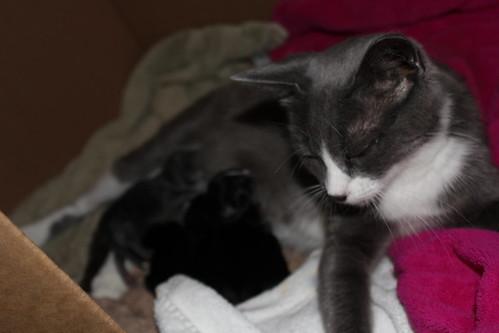 Grey's babies