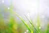 Rainy, sunny later (y2-hiro) Tags: sunlight macro grass rain drops nikon bokeh d300 70mm