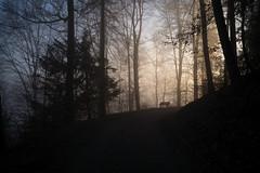 the bench (Toni_V) Tags: m2403106 rangefinder digitalrangefinder messsucher leica leicam mp typ240 type240 28mm elmaritm elmaritm12828asph hiking wanderung randonnée uetliberg üetzgi fog nebel mist sundaymorningphototour zurich zürich kantonzürich switzerland schweiz suisse svizzera svizra europe wald forest wood bench bank ©toniv 2017 170219 friesenburgweg