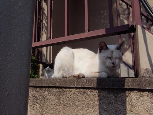 Today's Cat@20091016
