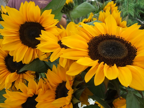 Sunflowers 10/3/09