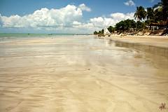 Low Tide (Japa ) Tags: trees brazil sky reflection praia beach water gua brasil clouds sand areia cu palmtrees joopessoa nuvens lowtide reflexo rvores coqueiros paraba marbaixa
