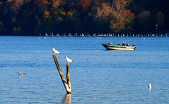 Irondequoit Bay - Seagulls (blmiers2) Tags: autumn seagulls lake newyork bird fall nature water birds geotagged boat nikon wildlife faves webster blm18 blmiers2