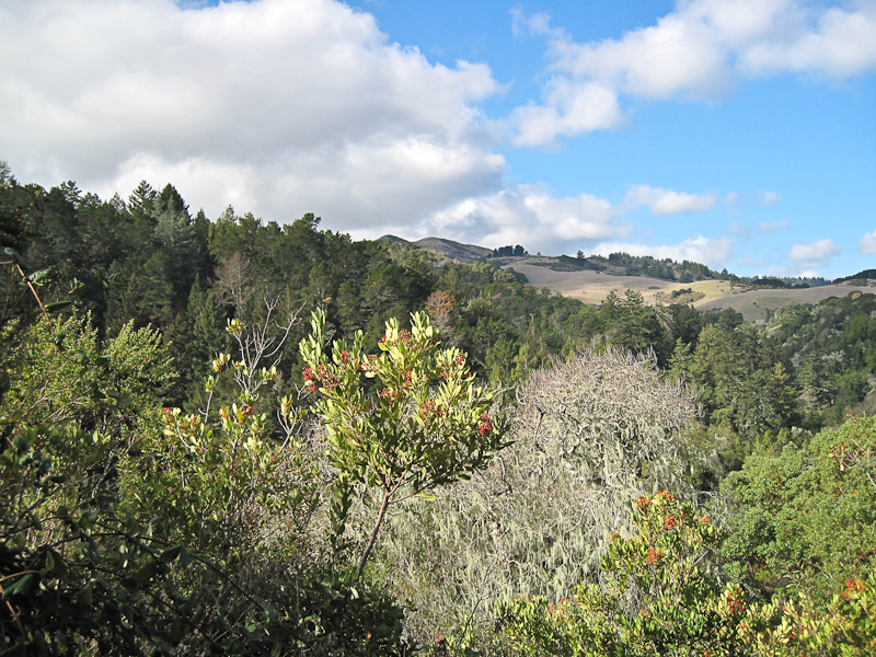 Toyon trail view