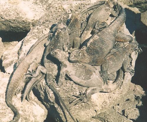 Galapagos-Rabida (3)
