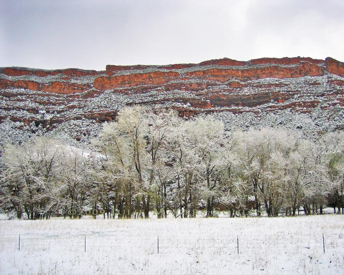 Snowy cottonwoods line a creek at the bottom of the towering western mesa pointing to a water source and creating layers of subtle color.