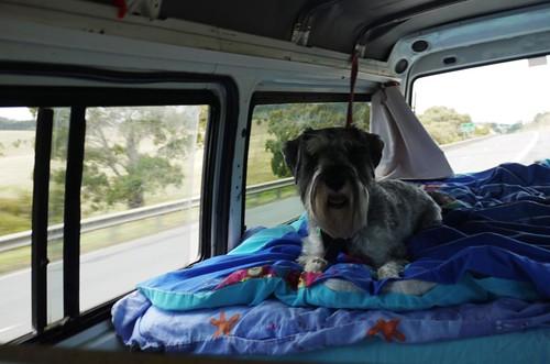 3 of 12: Lottie Rides In Comfort