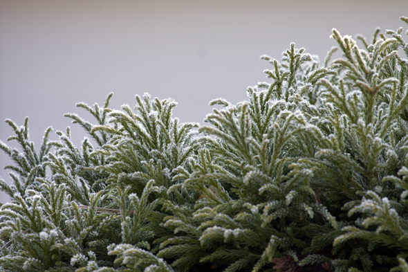 121909_frost2