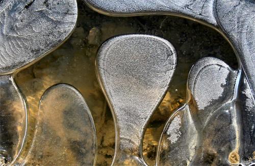 2010 janvier 19 Bords de chemin gelé (4)