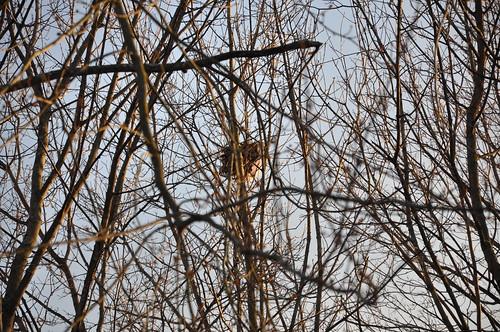 Bird's Nest #1
