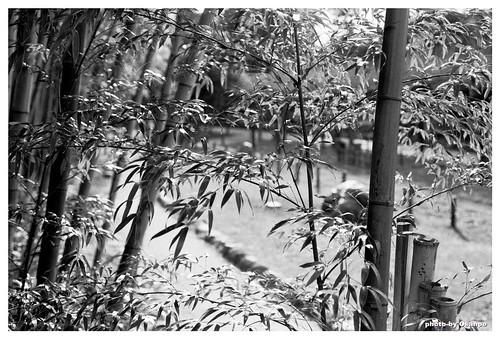 Bamboo Monochrome #02