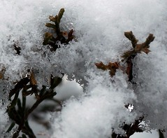 snow super close up