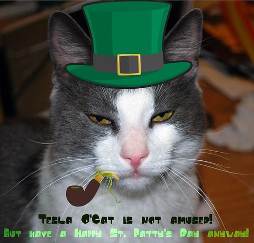 Tesla O'Cat