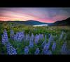 Rowena (Jesse Estes) Tags: oregon wildflowers rowenacrest jesseestesphotography