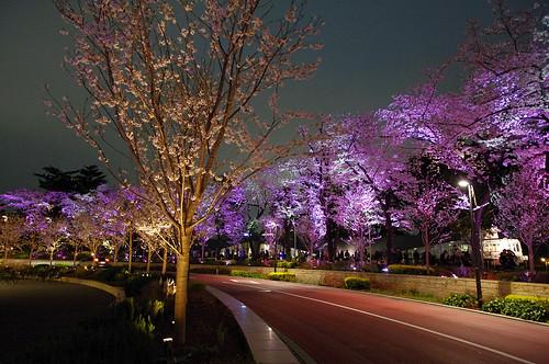 Sakura Effect 2010-01