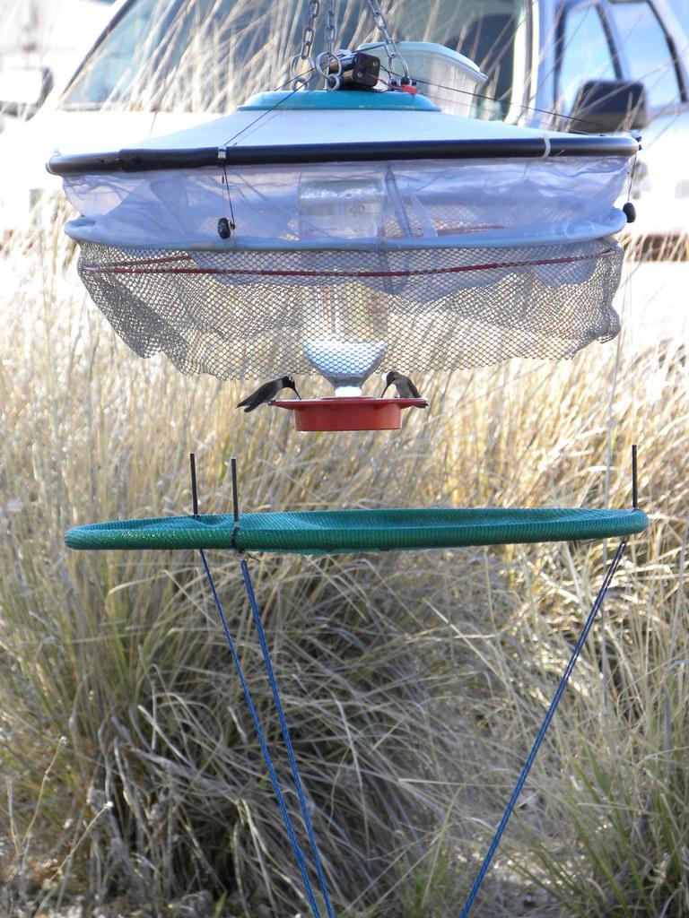 Hummingbird Trap