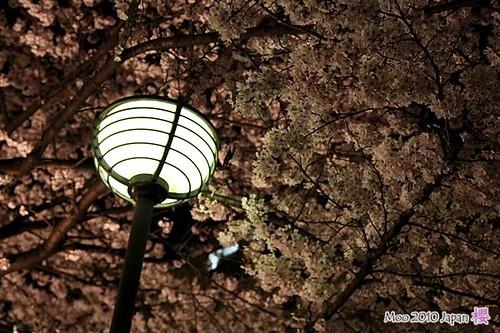 白川祇園-夜櫻7