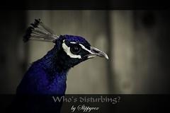 Who's disturbing?