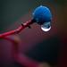 Unidentified wet berries (2 of 2)
