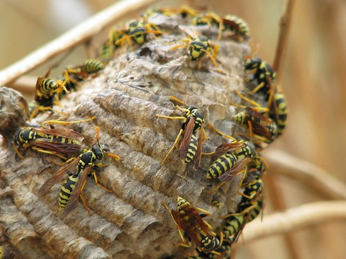 How to Find a Wasp Nest