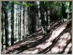 Light-flooded (ruschi_e) Tags: trees germany deutschland path bume schwarzwald blackforest weg grafenhausen anawesomeshot lightflooded lichtdurchflutet ruschie tannenmhle kunstplatzlinternational