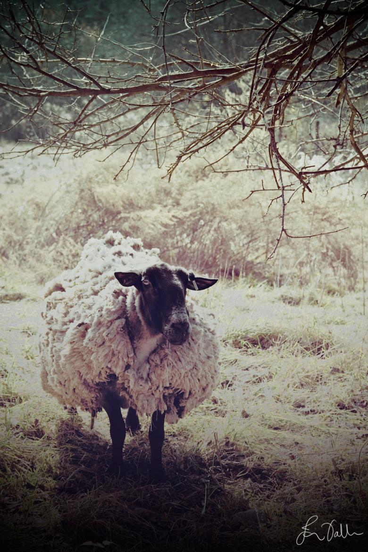 It's a ram!