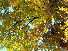 Fall Colors Boulder   DSCN0293