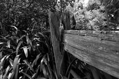 Old Fence (wolfcat_aus) Tags: blackandwhite bw fence nikon wide australia melbourne wideangle victoria tokina vic opengardens d90 nikond90 1116mm crudenfarm tokina1116mmf28 tokina1116mm tokinaaf1116mmf28 dameelizabethmurdoch tokinaatxprodx imagespace:hasdirection=false nikond90bw