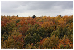 Boomkroonpad (Dit is Suzanne) Tags: autumn trees netherlands bomen herfst nederland drenthe  boomkroonpad drouwen views100   ditissuzanne canoneos40d img0068 canonef35135mm 25102009 geo:lat=52951353 geo:lon=6746598