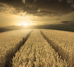 I Believe in God (Ben Heine) Tags: light summer food sun france art texture colors monochrome field sepia clouds composition work painting season print landscape freedom golden countryside photo spring corn nikon peace dof d70 god pov path walk lumire farm quality space faith perspective harvest free oxygen burn filter libert foi environment wisdom breathe paysage bog eternity campagne depth nourriture climate ferme chemin imagen dieu highres saison dor luminosity rcolte harmoy freeganism benheine ibelieveingod flickrunited imagicland glneurs infotheartisterycom