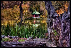 Fall in Golden Gate Park (edpuskas) Tags: sanfrancisco goldengatepark autumn fall canon ray mark ii nd 5d teahouse hdr stowlake singh vari