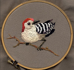 red bellied woodpecker (f. bearclaw) Tags: red bird woodpecker embroidery scanned freehand bellied