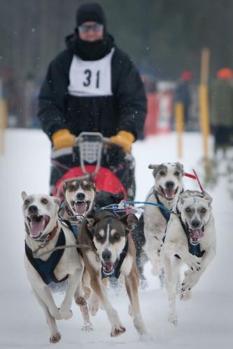 dog sled-30